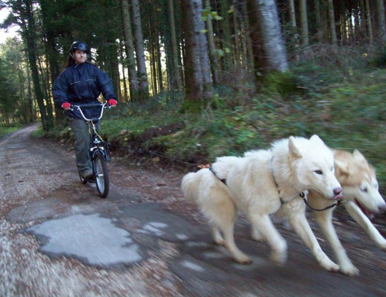 Trotinette avec les Huskies
