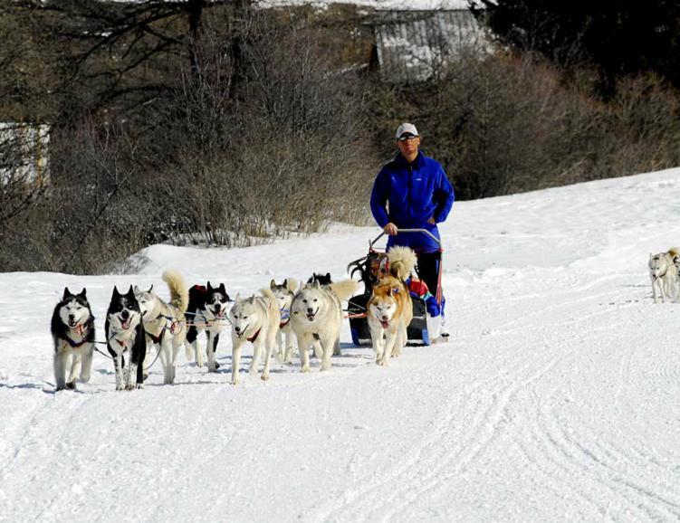 Aventure en chiens de traîneaux près de Zurich