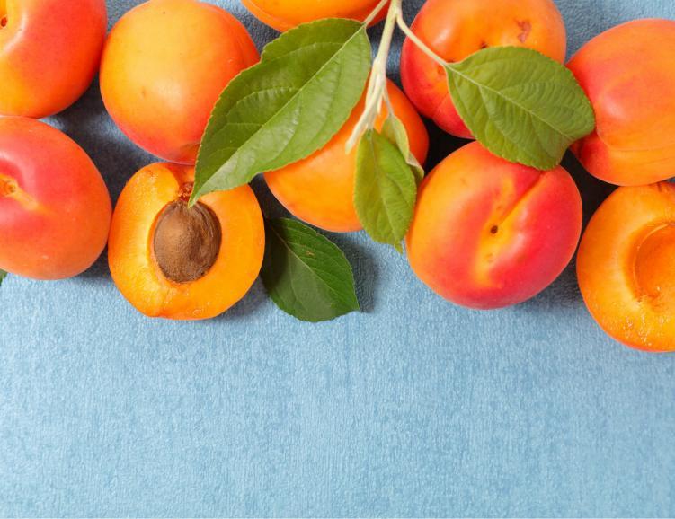Découverte de l'abricot