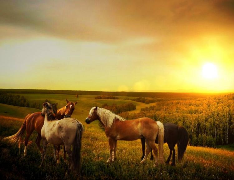 Une rando, un cheval, une rencontre