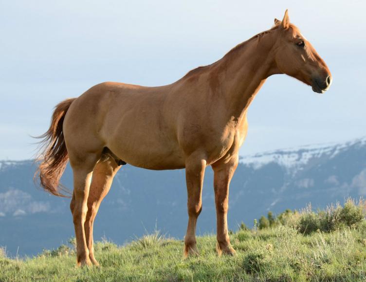 Séance pour votre cheval, chien ou autre animal