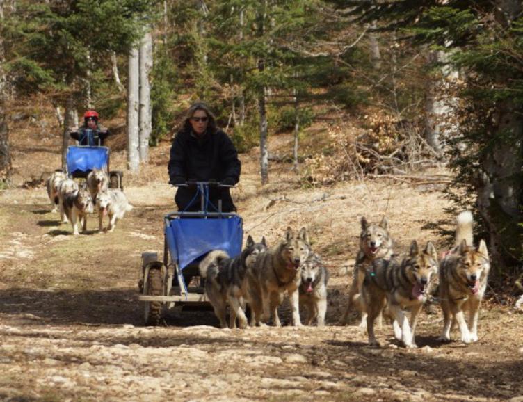 Aventure d'automne en chiens de traîneaux
